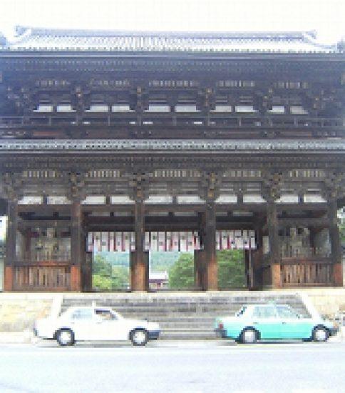 咲きほこる名勝御室桜「御室仁和寺」