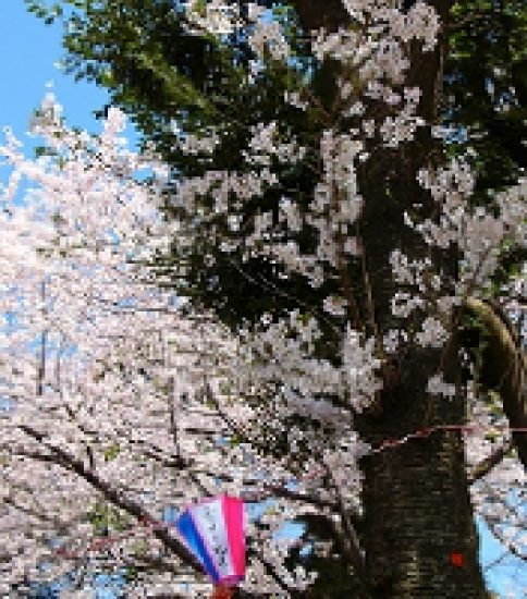 徳川吉宗が夢描いた江戸の花見の名所「飛鳥山公園」