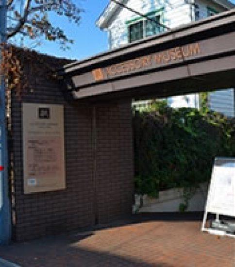 ラぺリスフラワーが咲き誇る「アクセサリーミュージアム」