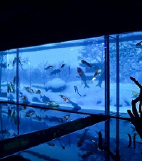 色とりどりの金魚が美しく舞う 新感覚の水中アート「アートアクアリウム展〜名古屋・金魚の雅〜&ナイトアクアリウム」